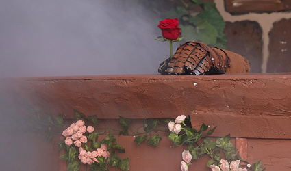 BB Rose Premiere06